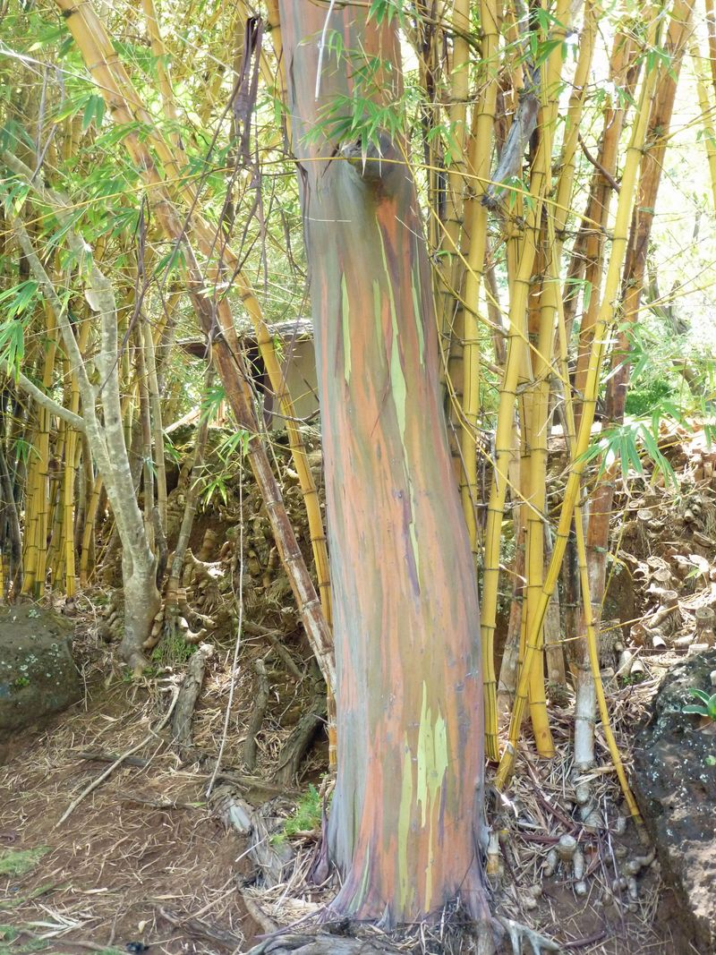 Rainbow colored tree trunk